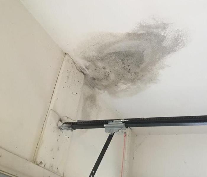 Mold Remediation Does Your Property Have Mold?